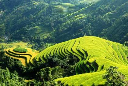 Thông tư số 205/2015/TT-BTC, ngày 23/12/2015 của Bộ Tài chính về cơ chế tài chính thực hiện chính sách hỗ trợ chăn nuôi nông hộ giai đoạn 2015-2020
